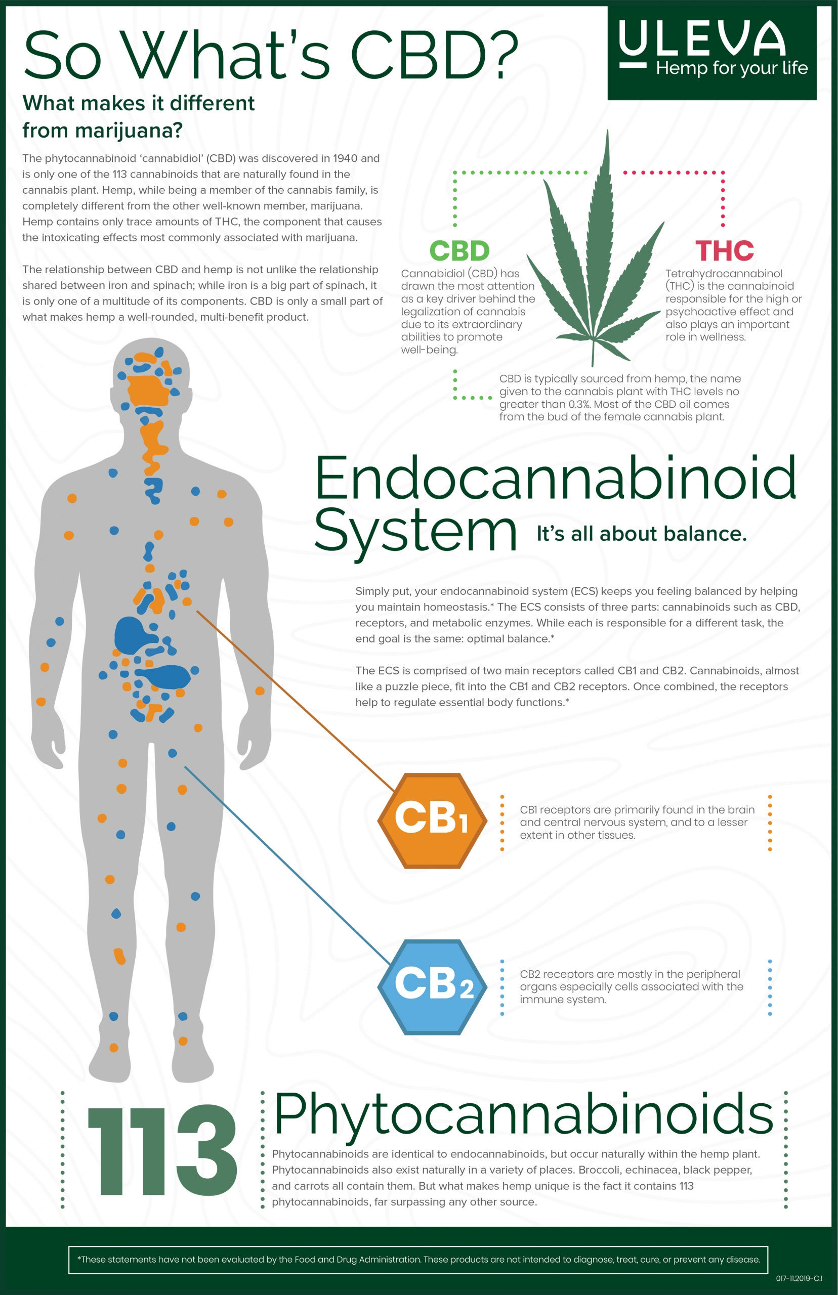 Endocannabinoid System 101 Infographic